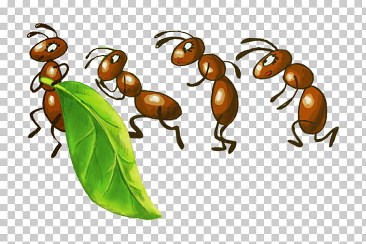Army ant Insect Ant colony Fire ant, insect PNG clipart.