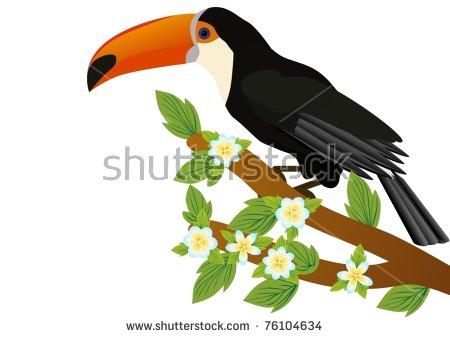 Exotic Birds Parrot Toucan Stock Photos, Exotic Birds Parrot.