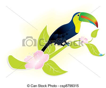 Clipart Vector of toucan bird.