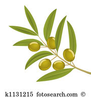 Olive branch Clip Art and Stock Illustrations. 628 olive branch.