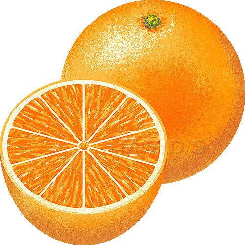 236 Oranges free clipart.