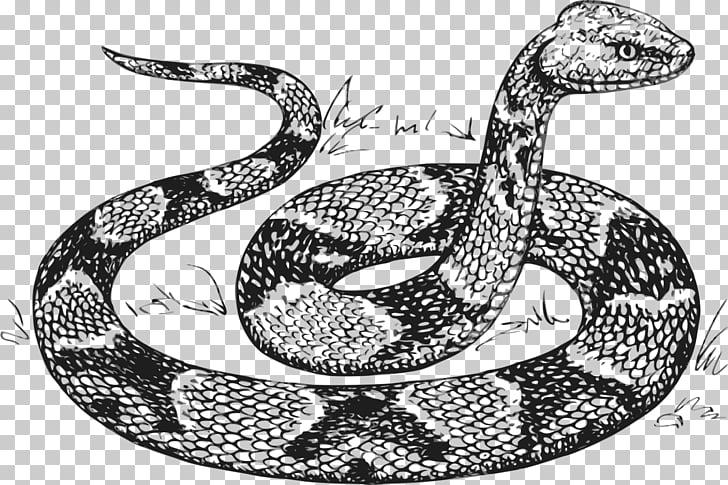 Snake Python Drawing , anaconda PNG clipart.