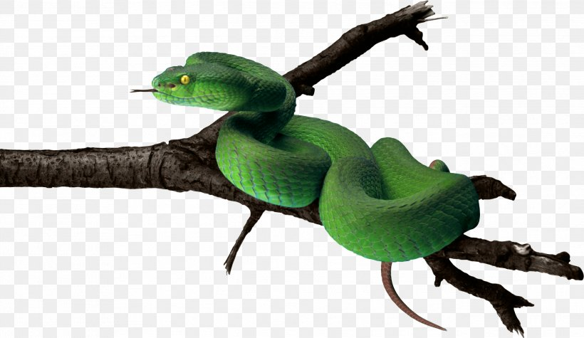 Snake Green Anaconda, PNG, 2589x1501px, Snake, Anaconda.