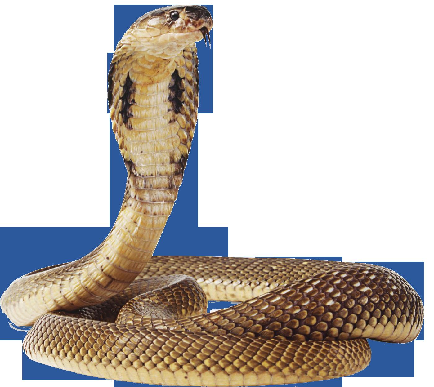Anaconda PNG Transparent Images.