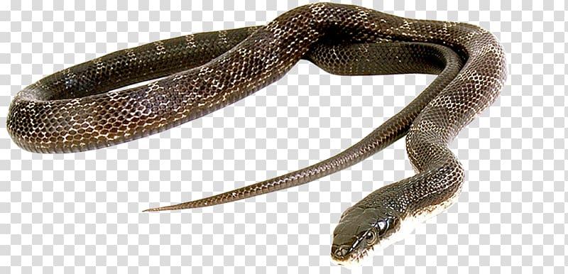 Snake Green anaconda Reptile Vipers Cobra, snake transparent.