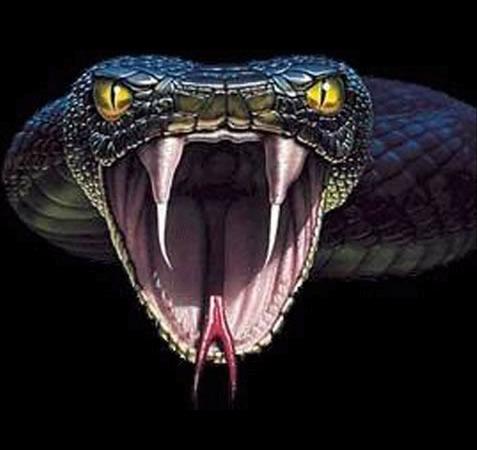 Anaconda.png  #11829.