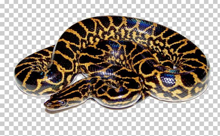 Anaconda PNG, Clipart, Anaconda Free PNG Download.
