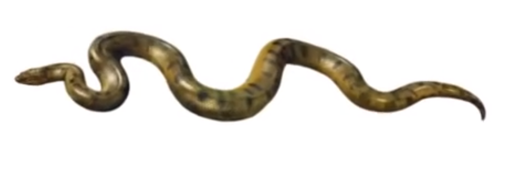 Anaconda PNG Transparent Anaconda.PNG Images..