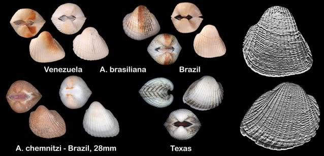Let's Talk Seashells!.