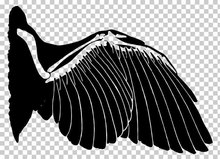 Wing Bird Analogous colors Feather Analogy, Bird PNG clipart.