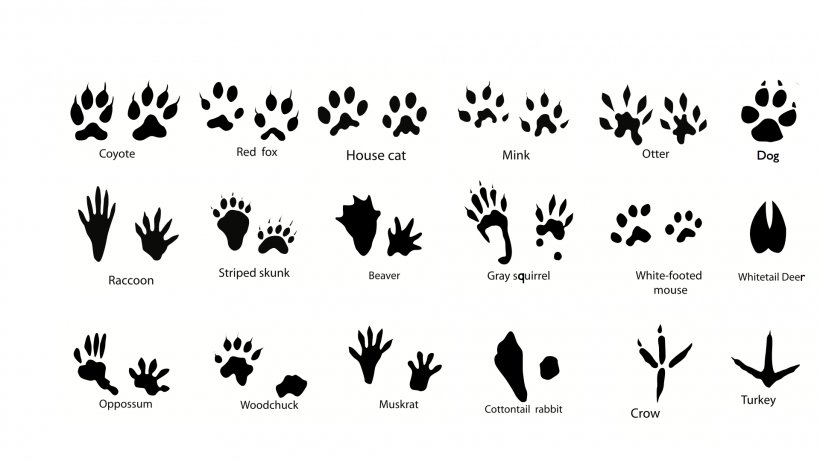 Squirrel Dog Animal Track Footprint Clip Art, PNG.
