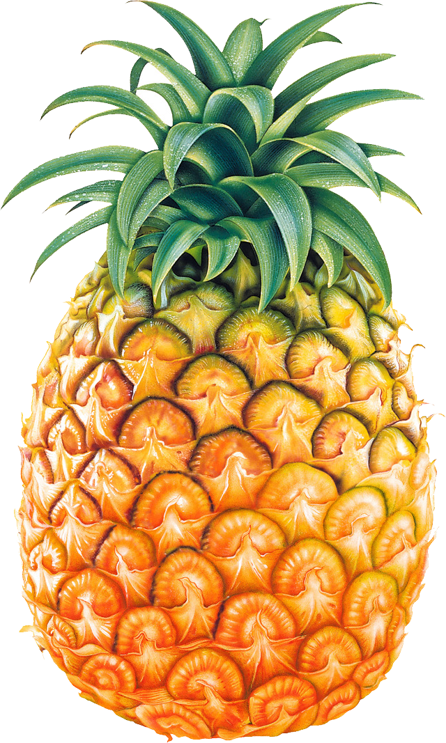 Pineapple clipart black and white free clipart 2.