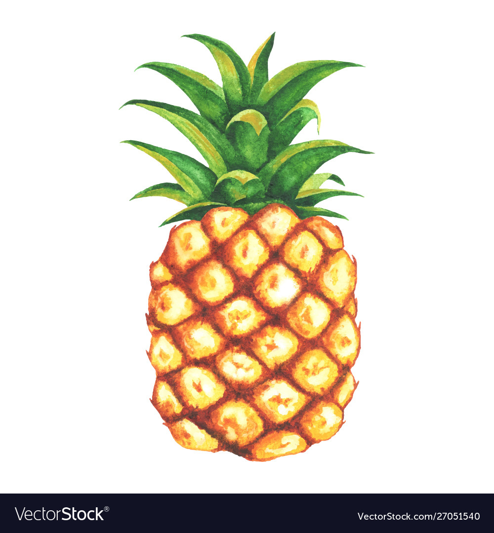 Beautiful watercolor pineapple clip art.