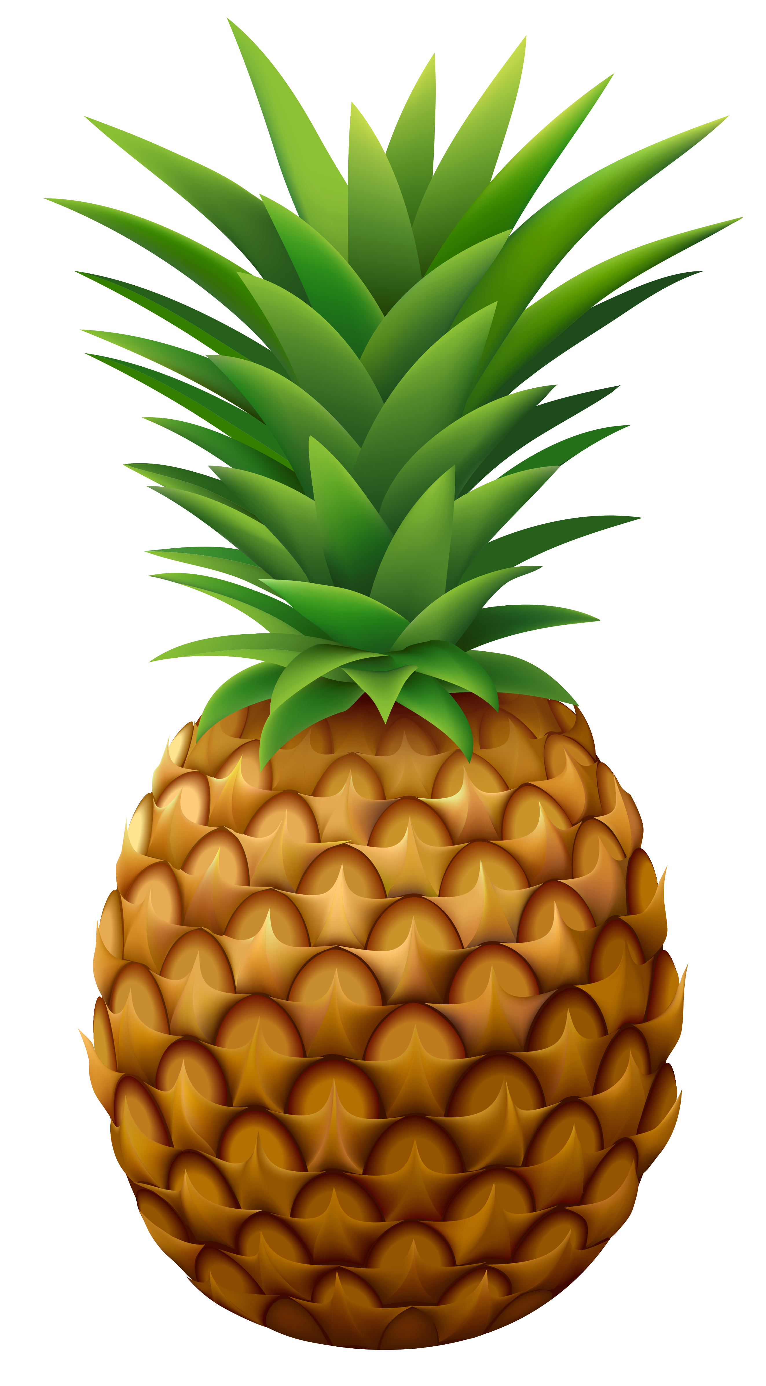 Pineapple PNG Vector Clipart Image.