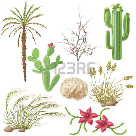 143 Tumbleweed Stock Illustrations, Cliparts And Royalty Free.
