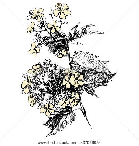 Anastatica Hierochuntica Tumbleweed Dinosaur Plant Jericho Stock.