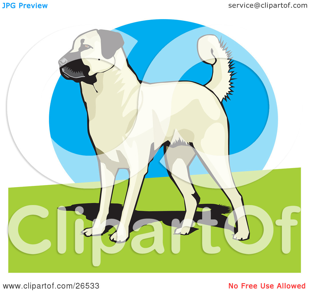Clipart Illustration of an Alert Anatolian Shepherd Dog Standing.