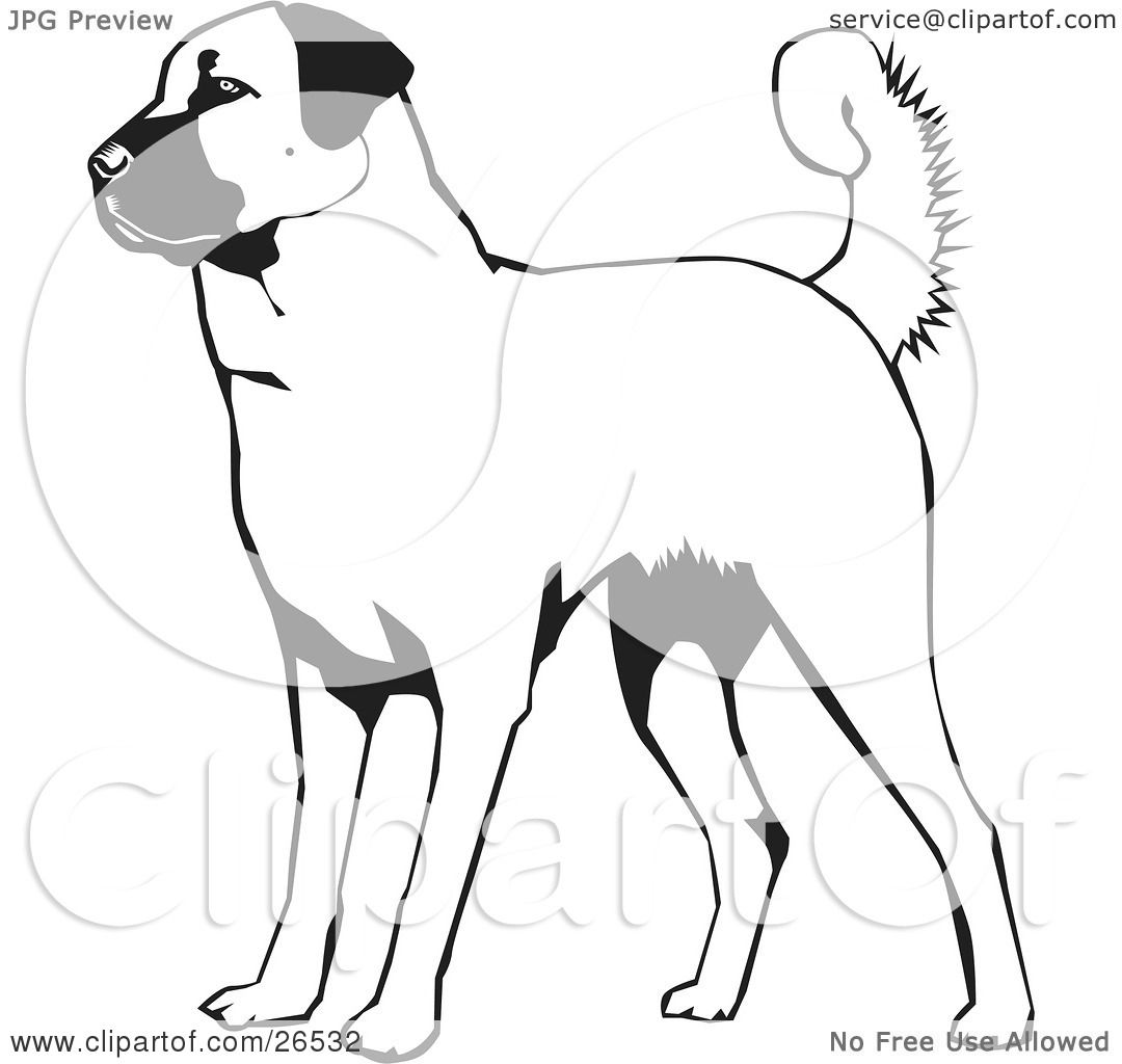 Clipart Illustration of an Alert Anatolian Shepherd Dog, Black And.