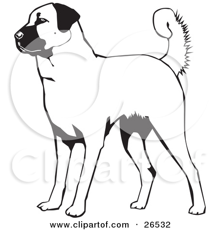 Clipart Illustration of a Friendly Anatolian Shepherd Dog Hanging.