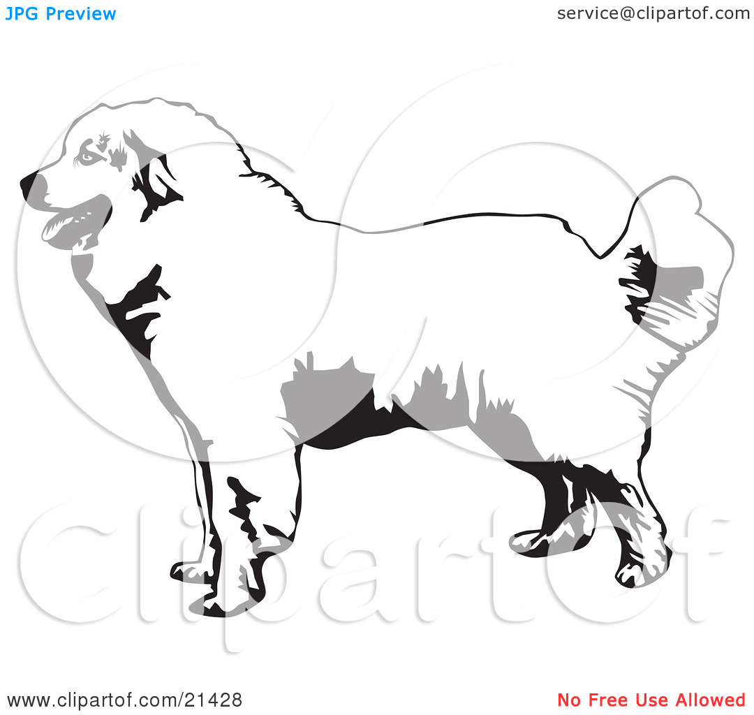 Clipart Illustration of a Friendly Great Pyrenees Mountain Dog In.