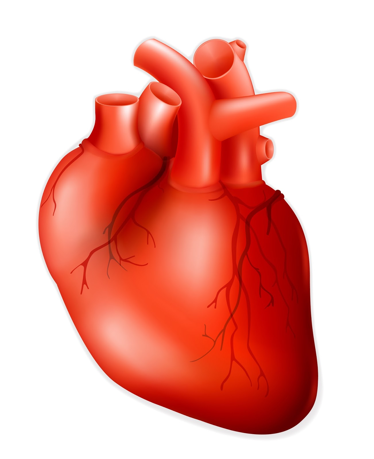 Free Heart Human, Download Free Clip Art, Free Clip Art on.