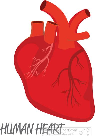 Human Heart Clipart Free Download Clip Art.