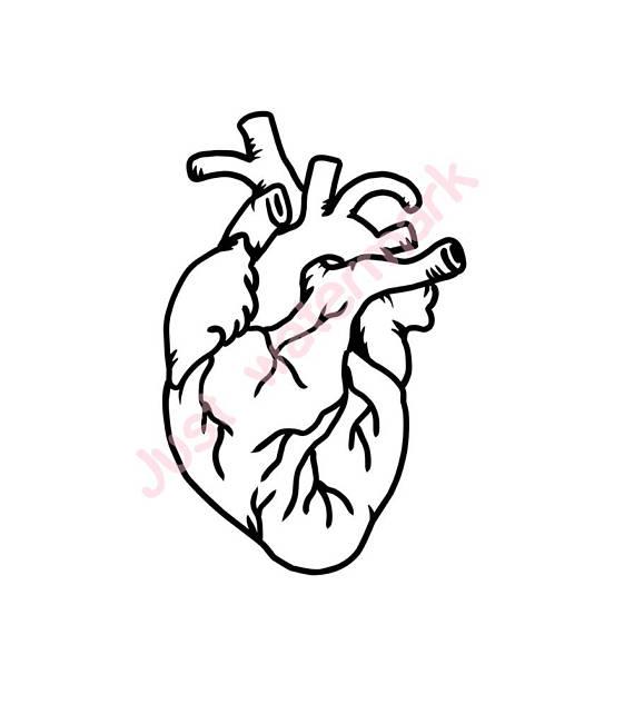 1248 Human Heart free clipart.