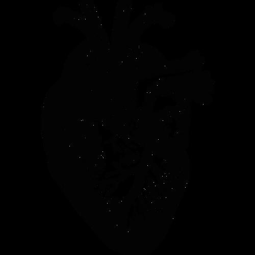 Anatomical heart vector illustration.