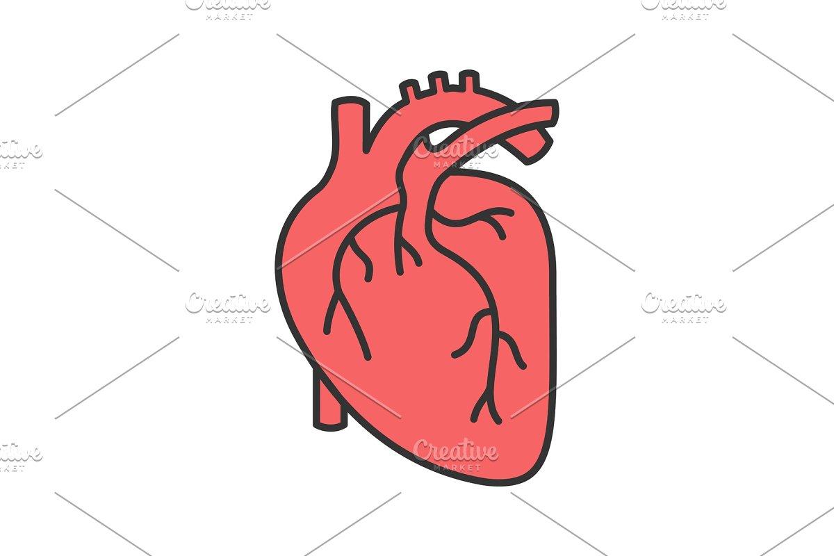 Human heart anatomy color icon.