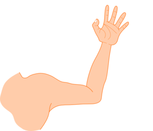 Left arm clip art clipart images gallery for free download.