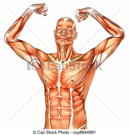 Anatomical Body Clipart.