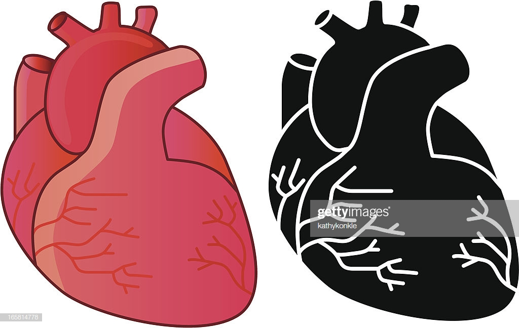 60 Top Human Heart Stock Illustrations, Clip art, Cartoons, & Icons.