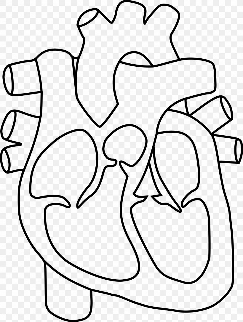 Heart Anatomy Coloring Book Drawing Clip Art, PNG.