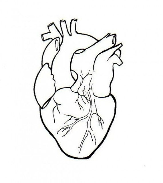 Real heart human heart clipart drawing clipartxtras.
