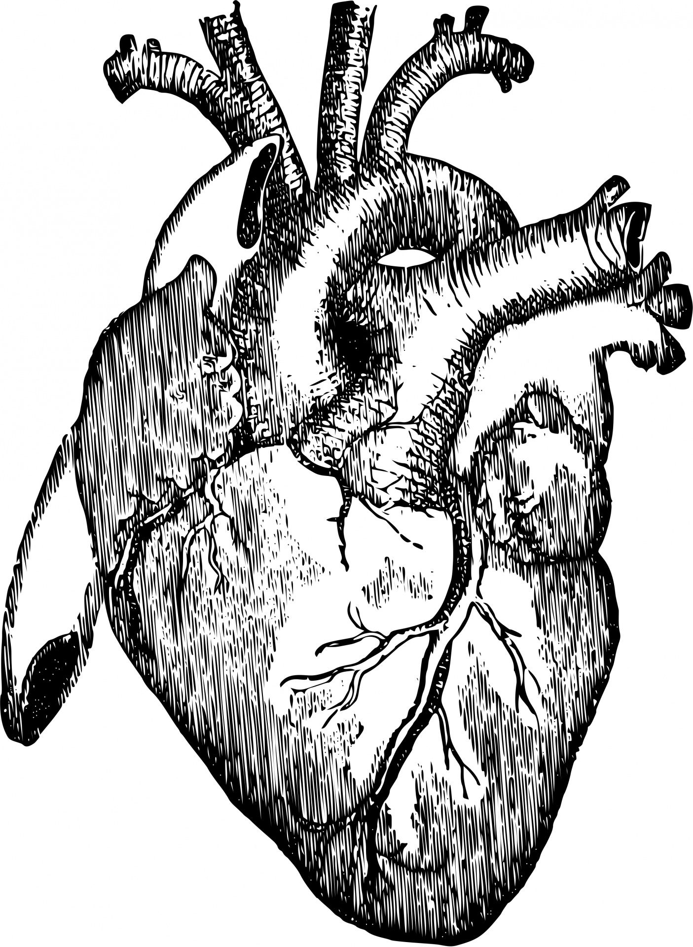 1405x1920 Organs clipart realistic heart in 2019.