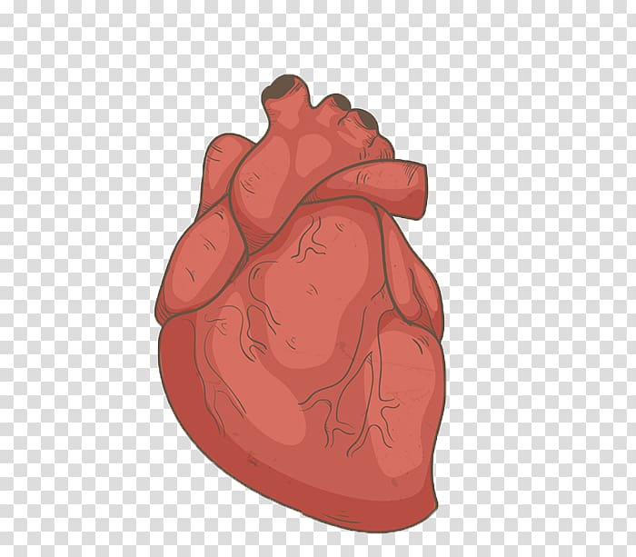 Hand drawn human heart transparent background PNG clipart.