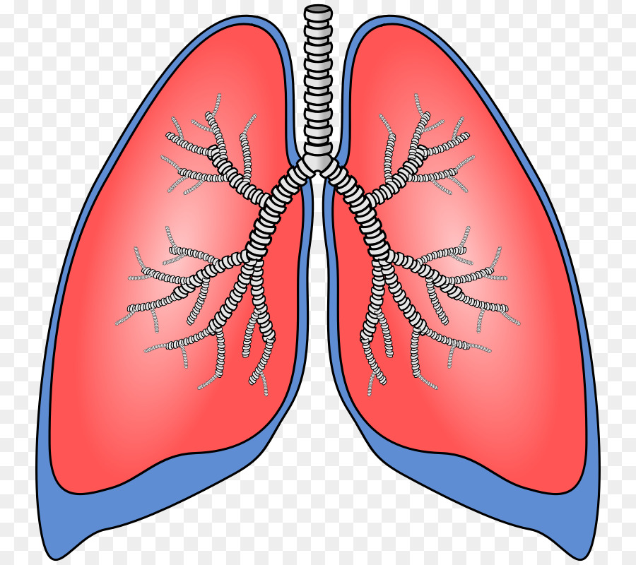 Lung Scalable Vector Graphics Breathing Clip art.