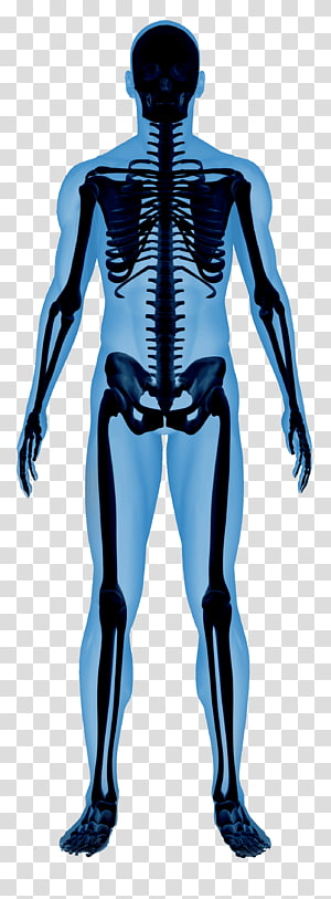 Human Anatomy Physiology transparent background PNG cliparts.