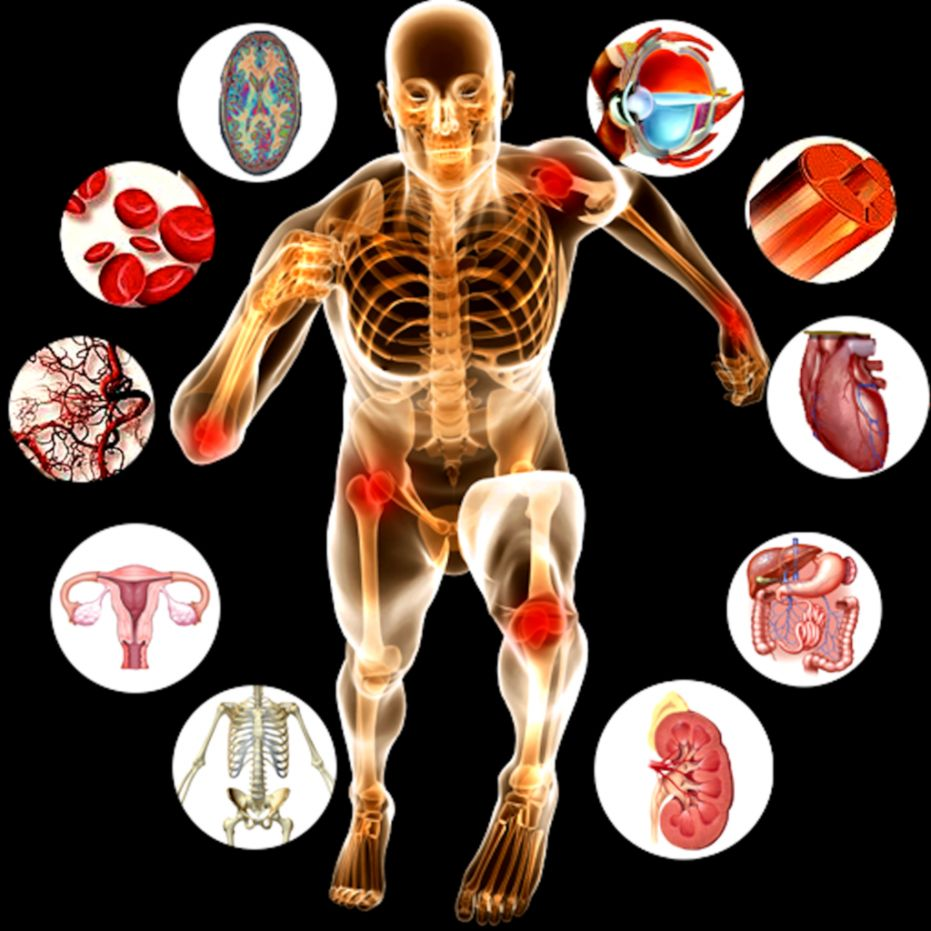 anatomy and physiology clipart free - Clipground