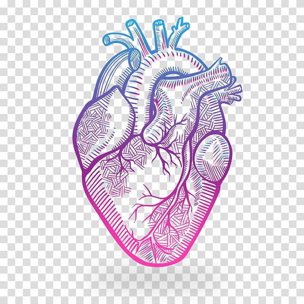 Heart Anatomy Drawing, heart transparent background PNG.