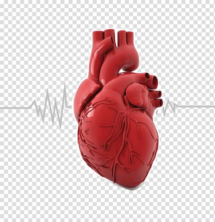 Organ printing Heart Anatomy Human body, cholesterol.