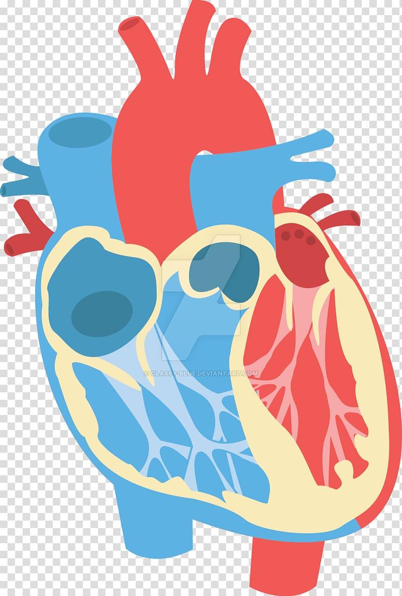 Heart Diagram Anatomy , diagram transparent background PNG.