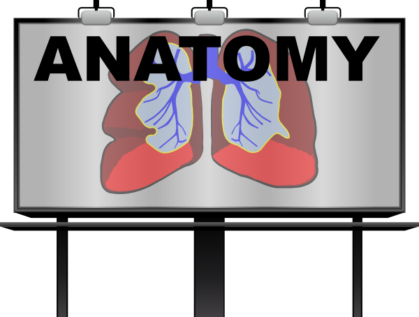 Anatomy Clip Art.