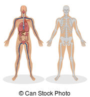 Anatomy Clipart and Stock Illustrations. 82,175 Anatomy vector EPS.