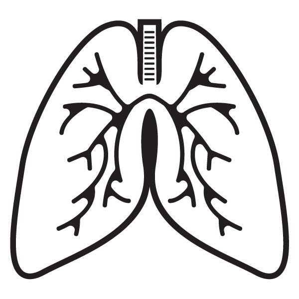 Lungs Anatomy Breathing Png Image Black And White.