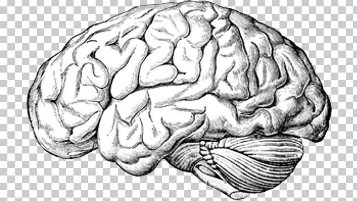 Human Brain A Text.