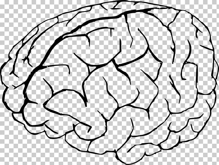 Coloring book Human brain Anatomy, Brain PNG clipart.