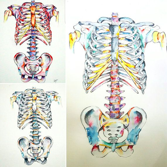 Medical Anatomy Art.