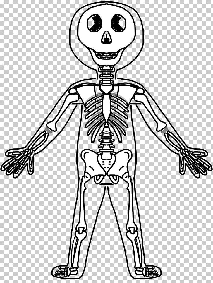 Human Skeleton Human Body Bone PNG, Clipart, Anatomy.