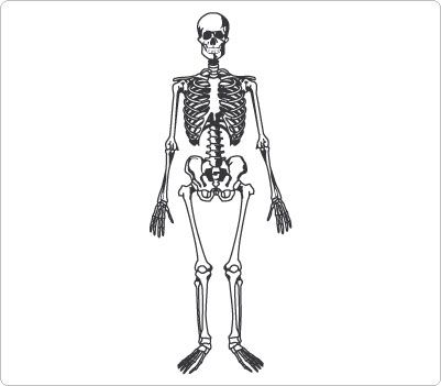 Human skeleton Clip Art.